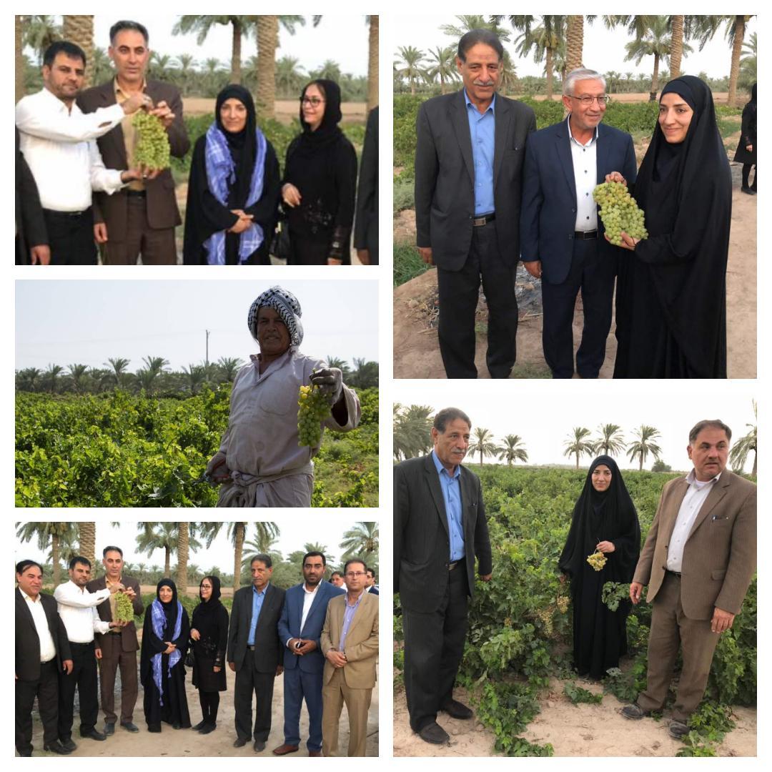 جشنواره انگور در روستای غزاویه کوت عبدالله برگزار می شود
