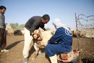 ۳.۵میلیون راس دام در خوزستان علیه بیماری طاعون واکسینه شدند