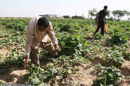 بعد از ممنوعیت تابستانه ، قطار کشاورزی خوزستان به ایستگاه محدودیت کشت پاییزی هم رسید